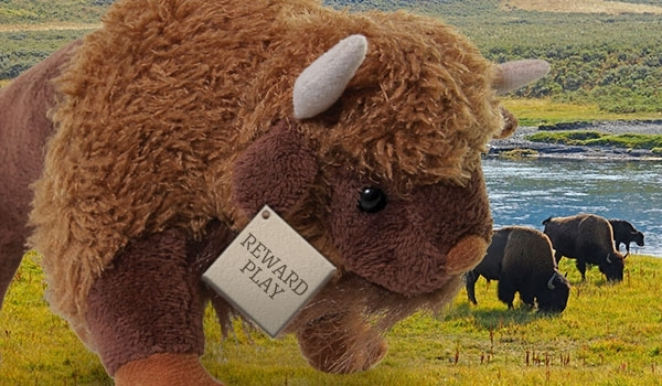 Card kalispel buffalo tuesday